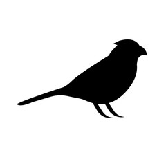 black cardinal bird silhouette with closed wings on white background