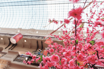 Beautiful pink sakura in a large shopping center with a glass roof pleases the eye of buyers