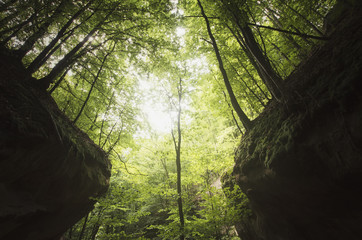 trees on canyon cliffs in green forest, natural symmetrical landscape