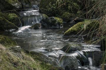 Rural woodland stream Shropshire UK