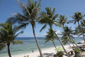 Beautiful palm trees in Guam
