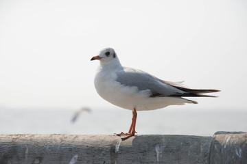 Seagull standing on a bridge at Miami,USA
