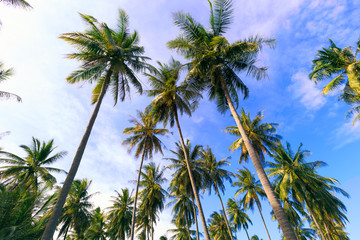 Palm trees  with blue sky at tropical beach coast,summer holiday concept background
