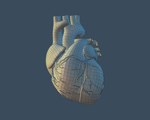 3D human heart with wireframe on blue BG