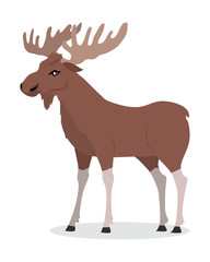 Moose Male Vector Illustration in Flat Design