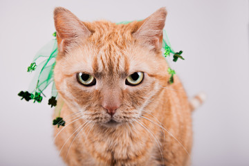 Orange St. Patrick Cat