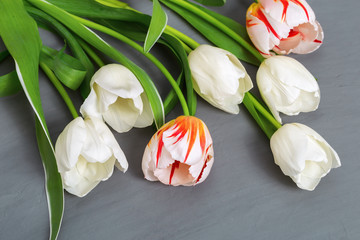 Bouquet of fresh white and red tulips on gray concrete background with copy space. Natural white flowers. Top view.