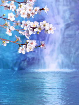 Plum tree white flowers on the waterfall background