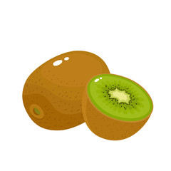 Bright vector illustration of colorful fresh kiwi isolated on white