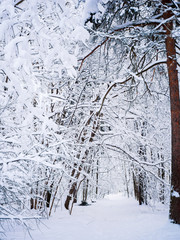 Picturesque picture of winter landscape in woods