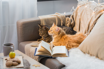 Fototapete - two cats lying on sofa at home