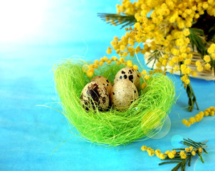 Quail eggs in a green ornamental nest on blue background. Bouquet of mimosa flowers in a wicker basket next to it. Sun glare