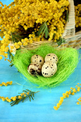 Quail eggs in a green ornamental nest on blue background. Bouquet of mimosa flowers in a wicker basket next to it