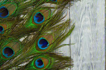 A peacock feather on wooden grey background