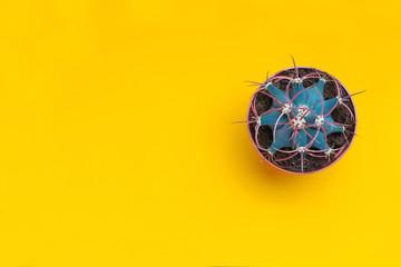 Cactus,succulent. Yellow background Minimal creative still life. Minimal art design