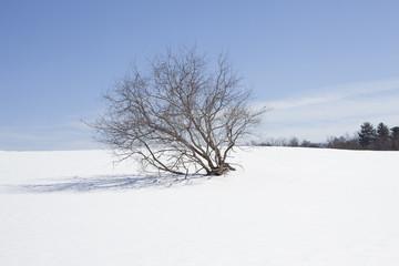 tree in a snow field
