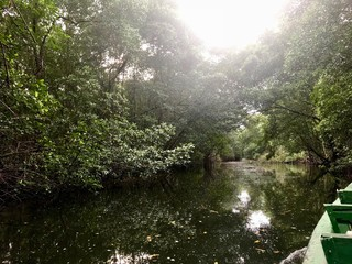 Mangrove wetland of the Caroni Swamp and Bird Sanctuary boat ride excursion on the Caribbean island of Trinidad & Tobago