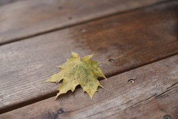 autumn maple leaf wooden floor