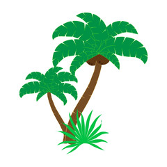 illustration of a palm tree on a white background. T-shirt graphics