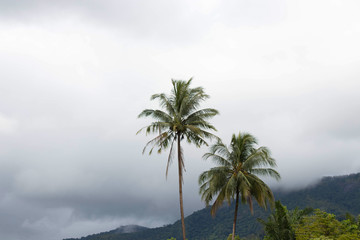 Coconut palm tree on the island with mist after rain fall in nature background