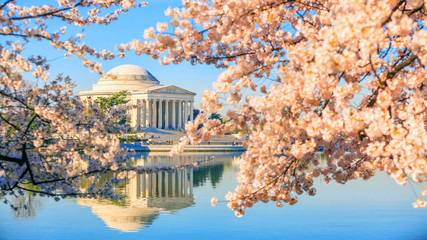 Jefferson Memorial during the Cherry Blossom Festival Fototapete