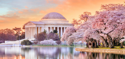 Photo sur Plexiglas Lieux connus d Amérique Jefferson Memorial during the Cherry Blossom Festival