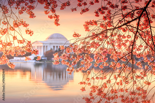 Wall mural Jefferson Memorial during the Cherry Blossom Festival