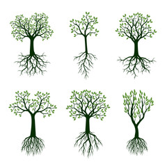 Set of Green Spring Trees with Leaves and Roots. Vector Illustration.