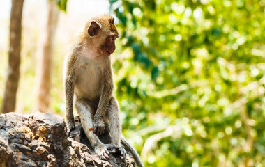 funny monkey lives in a natural forest