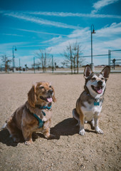 Two best friend dogs at the park
