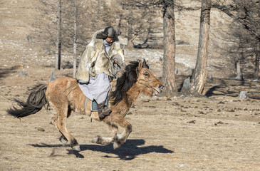 nomad man wearing a wolf skin jacket, riding his horse in a steppe in Northern Mongolia