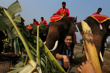 A woman feeds elephants during Thailand's national elephant day celebration in the ancient city of Ayutthaya