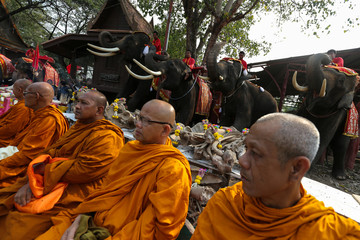 Buddhist monks attend during Thailand's national elephant day celebration in the ancient city of Ayutthaya
