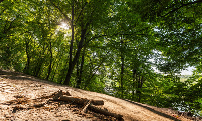 sunlight shines through the green forest trees