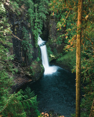 A tall waterfall pours over the cliffs edge in the mountainous rain forests of Oregon
