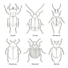 Set of beetle illustrations