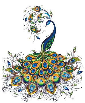 Fantasy peacock drawing on white background