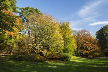 Herbstlandschaft im Rombergpark, Dortmund, Nordrhein-Westfalen, Deutschland, Europa
