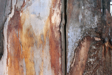 the texture of the bark of the tree as a natural background