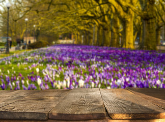 wooden table with  blooming, spring crocuses