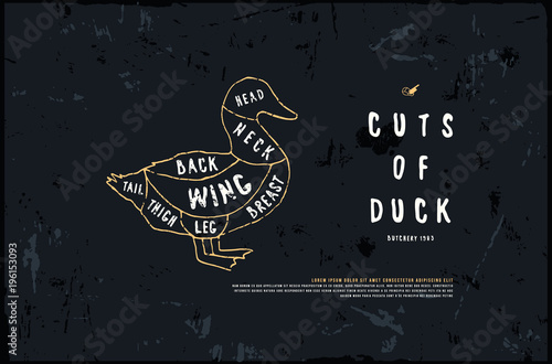 500_F_196153093_06FcZ8qY4KdrTf4dN0Xq3DXWubuEDQ44 stock vector duck diagram in the style of handmade graphics\