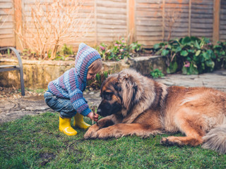 Little boy playing with dog in garden