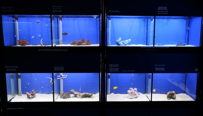 "Fish are seen for sale at ""Wildwoods"" in Crews Hill, Britain"