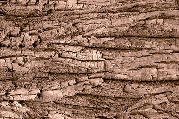 Tree bark background macro