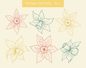 Daffodil vintage clipart set. Isolated hand drawn flower contours.