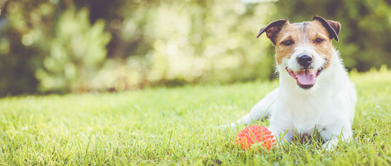 Spoed Fotobehang Hond Pet dog lying on grass at sunny summer day (panoramic crop)
