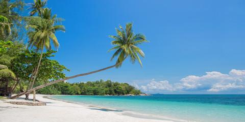 Aluminium Prints Beach Tropical beach panorama with a leaning palm tree, Bintan island near Singapore, Indonesia