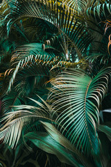 Deep dark green palm leaves pattern. Vertical, creative layout