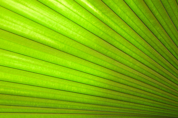 Palm leaves as a background