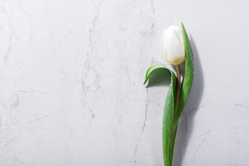 Single white spring flower on a marble background.